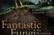 Фантастические грибы (2019)